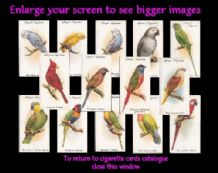 Cigarette cards set Aviary & Cage Birds 1933